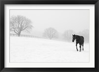 Walking In Fog Framed Print