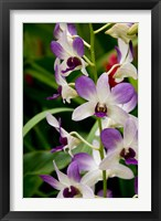 Framed Flowers in National Orchid Garden, Singapore