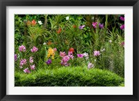 Framed Flower Bed, National Orchid Garden, Singapore