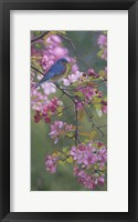 Framed Bluebird Pink Blossoms