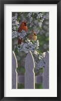 Framed Cardinals and Apple Blossoms