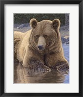 Framed Cool Down - Grizzly