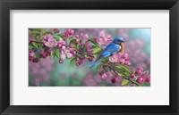Framed Garden Sapphire - Bluebird