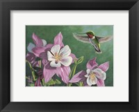 Framed Hummingbird Pink - Columbine