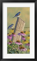 Framed Monarchs of the Prairie - Bluebirds