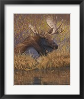 Framed Nested in Teton - Moose