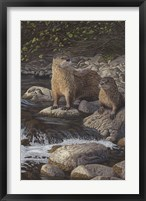 Framed Otter Tail River Otters
