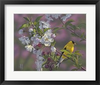 Framed Gold Pink White Goldfinch