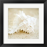 Framed Seashore Shells II