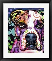 Framed American Bulldog 1