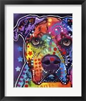 Framed American Bulldog 3