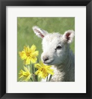 Framed Easter Lamb