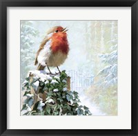 Framed Robin On Ivy