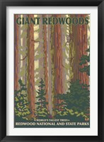 Framed Giant Redwoods