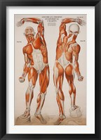 Framed American Frohse Anatomical Wallcharts, Plate 2
