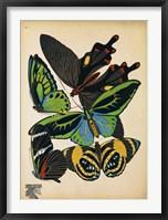 Butterflies Plate 1 Framed Print