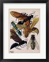 Framed Insects, Plate 15