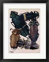 Framed Insects, Plate 4