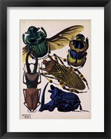 Framed Insects, Plate 7