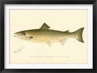 Framed Atlantic Salmon