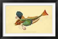 Framed Natural History of British Fishes - Plate 1