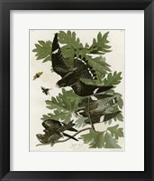 Framed Night Hawk