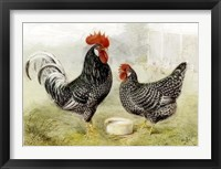 Framed Roosters