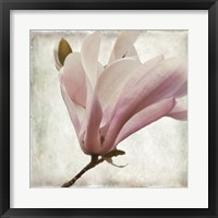 Framed Petal Purity I