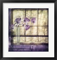 Framed Window Orchids