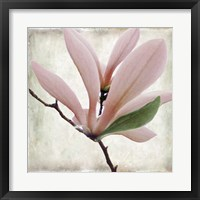 Petal Purity III Framed Print