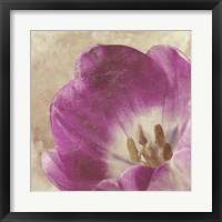 Buttercream Tulip 1 Framed Print