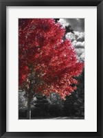 New England Autumn II Framed Print