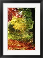 New England Autumn III Framed Print