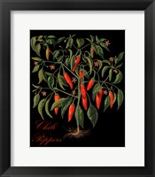 Framed Chili Peppers