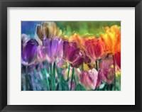 Framed Tulip Farm