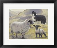 Framed Tending the Sheep