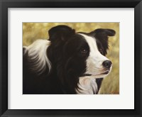 Framed Border Collie 3