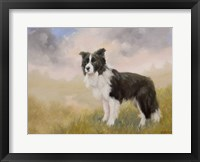 Framed Border Collie 5