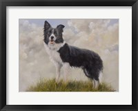 Framed Border Collie 13