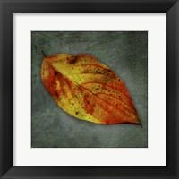 Dogwood Yellow Framed Print