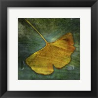 Gingko 3 Framed Print