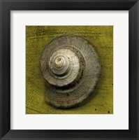 Whelk Crown Framed Print