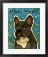 Framed French French Bulldog - Black Brindle and White