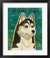 Framed Siberian Husky