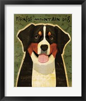 Framed Bernese Mountain Dog