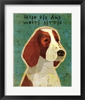 Framed Irish Red and White Setter