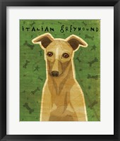 Framed Italian Greyhound - Fawn