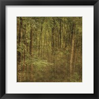 Fog in Mountain Trees Framed Print