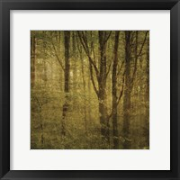Fog in Mountain Trees No. 2 Framed Print
