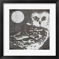 Owl 3 Framed Print